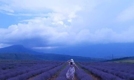 Lavender plantations – Tamnjanica